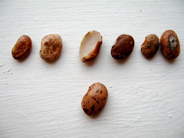 Bad bean line up, good bean on bottom.